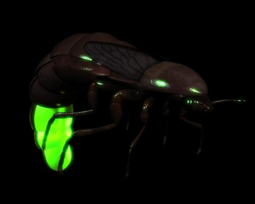 Glow worms preview image