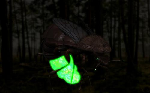 Glow Worms final preview image
