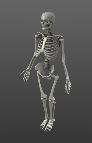 Blend Swap Simple Rigged Skeleton Create and share blender assets. blend swap simple rigged skeleton