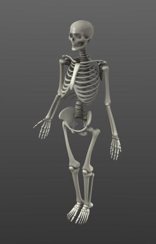 Simple Rigged Skeleton preview image