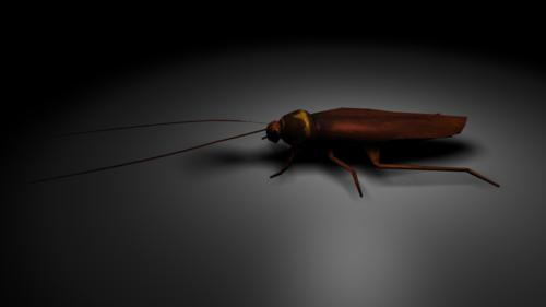 animals roach preview image