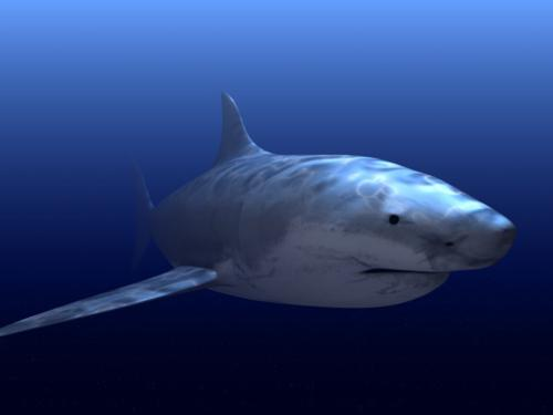 Great White Shark preview image