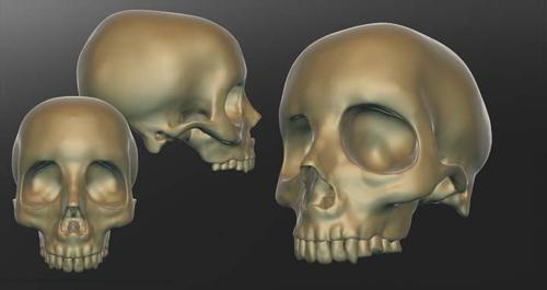Human Skull (high Poly) preview image