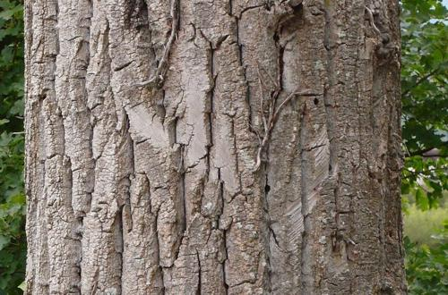 Bark Textures preview image