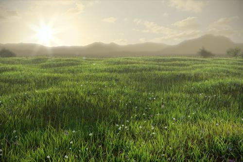 Grassy Field preview image
