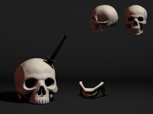 Human Male Skull preview image