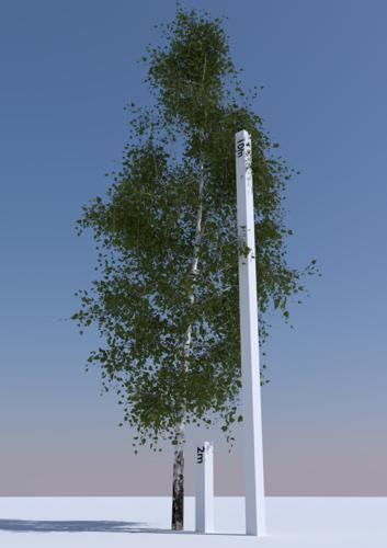 Betula Pendula 2 preview image