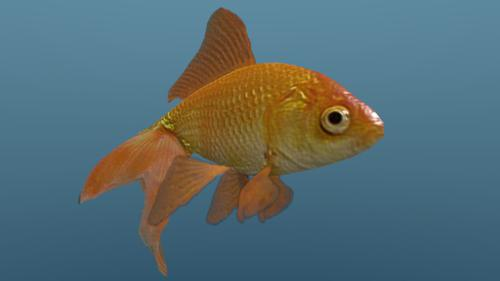 Low Poly Goldfish preview image