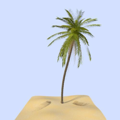 Palm Tree preview image