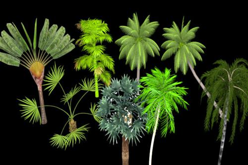 Tropical Trees preview image