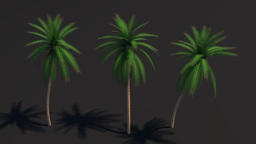 Palm Tree  Cycles Ready  preview image