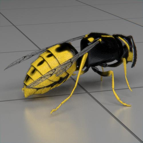 wasp animated preview image