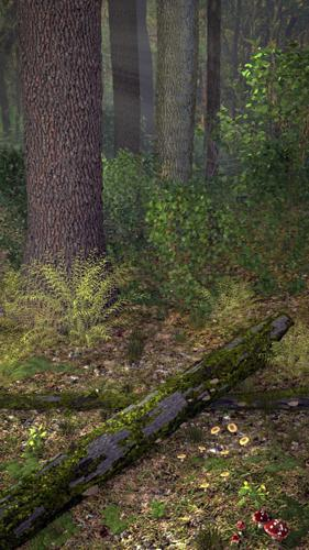 Forest Floor preview image
