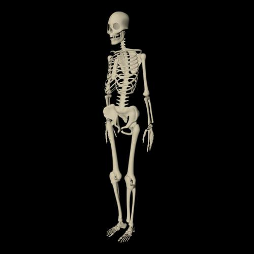 Skeleton  Unrigged  preview image