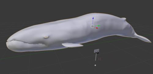 Quality Blender Whale preview image