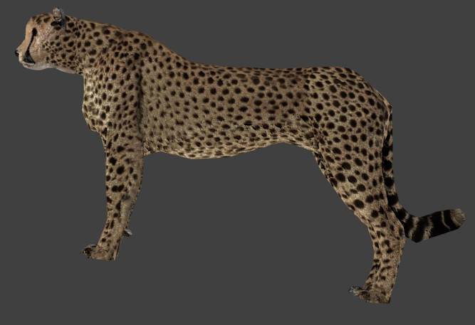 Cheetah preview image 1