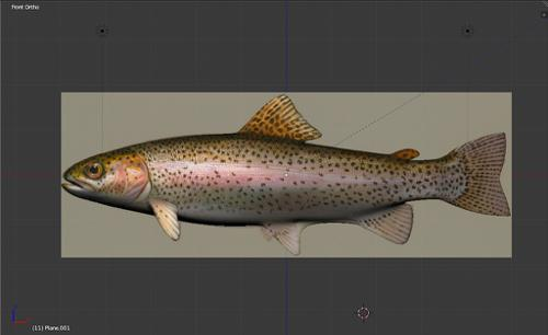 Rainbow Trout preview image