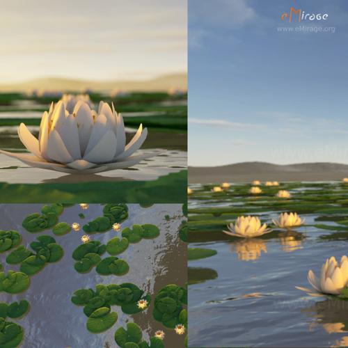 white lotus flower preview image