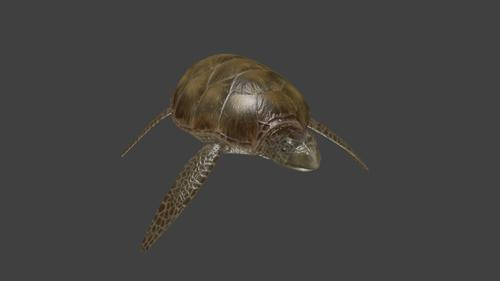 Ocean Turtle preview image