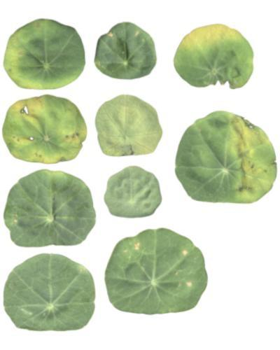 10 Leaf Textures preview image