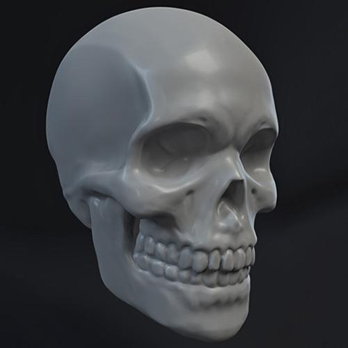 Skull Sculpt preview image
