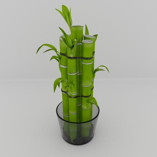Lucky Bamboo preview image
