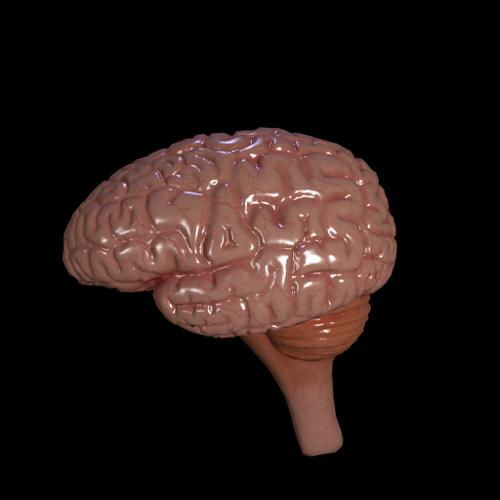brain preview image