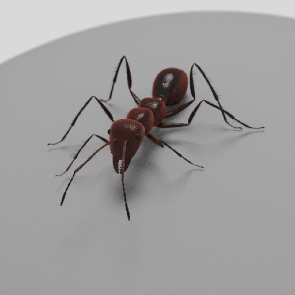 Ant - rigged, animated preview image 1