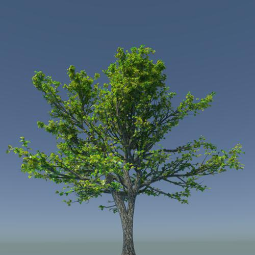 High Poly Tree preview image