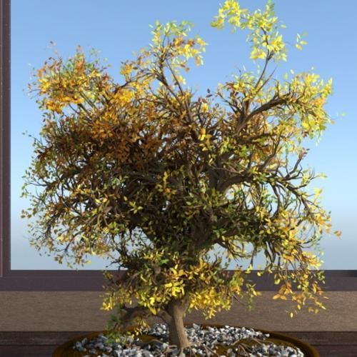 Bonsai preview image
