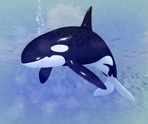 Orca preview image