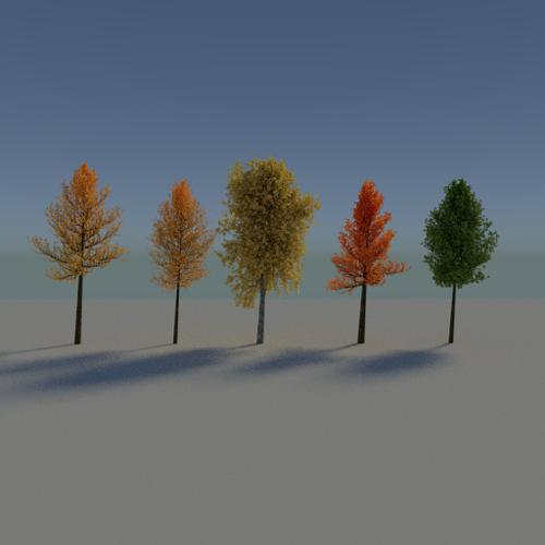 Autumn Trees preview image