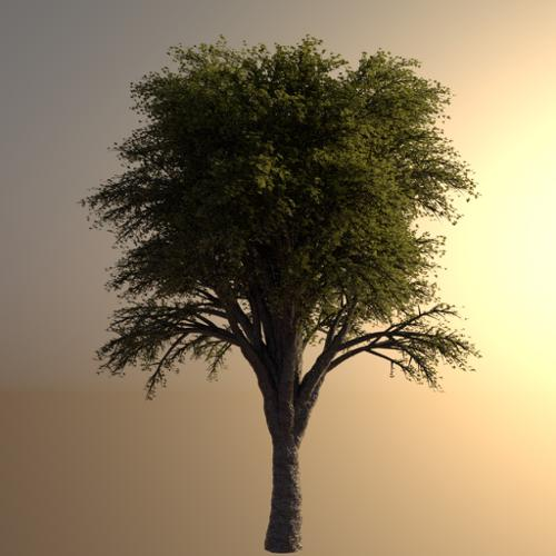 Realistic High Poly Tree preview image
