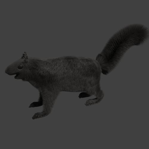 Squirrel preview image