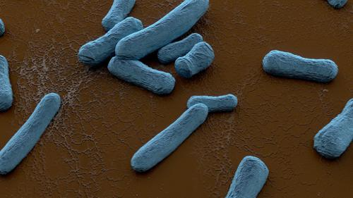 Bacteria on Scanning Electron Microscope preview image