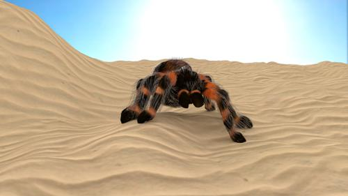 Bird eater spider/tarantula with rig preview image