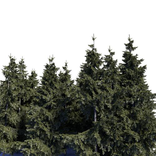 Background spruces preview image