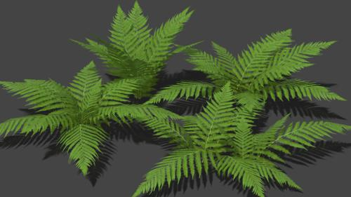 4 Fern Models (Low Poly + LoD) preview image