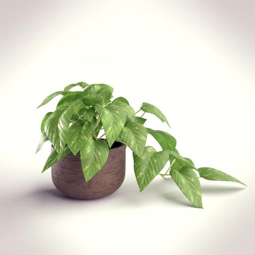 Indoor Plant In A Pot preview image