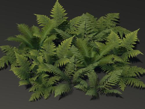 Low Poly Fern Models preview image