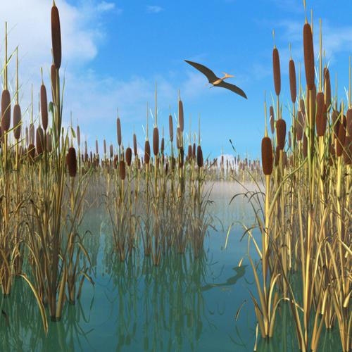 Reed, Cattail, Bulrush, Corn Dog Grass preview image