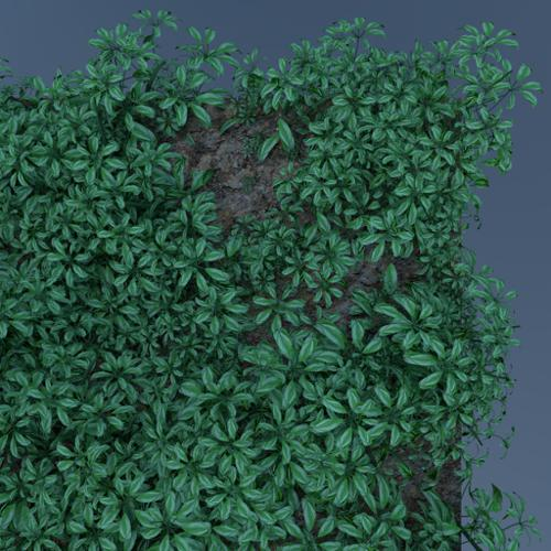 Island foliage  preview image