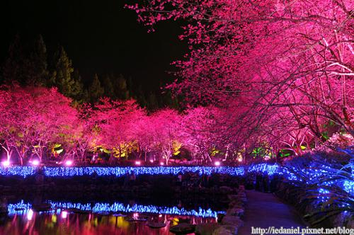 Taiwan Cherry Blossom Lake preview image