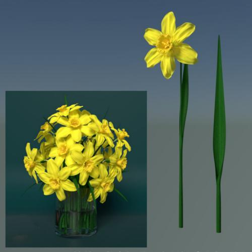 Rush Daffodil (Narcissus jonquilla, żonkil) preview image