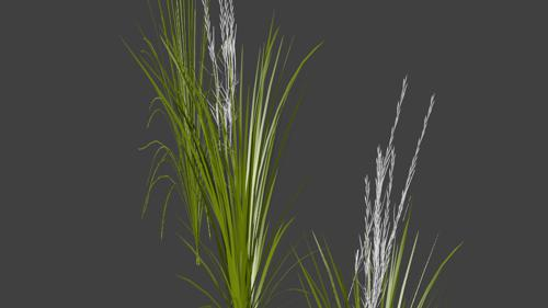 Rice Crop preview image