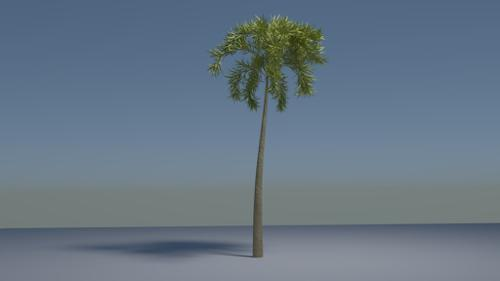 Tropical Palm Tree (Cycles) preview image