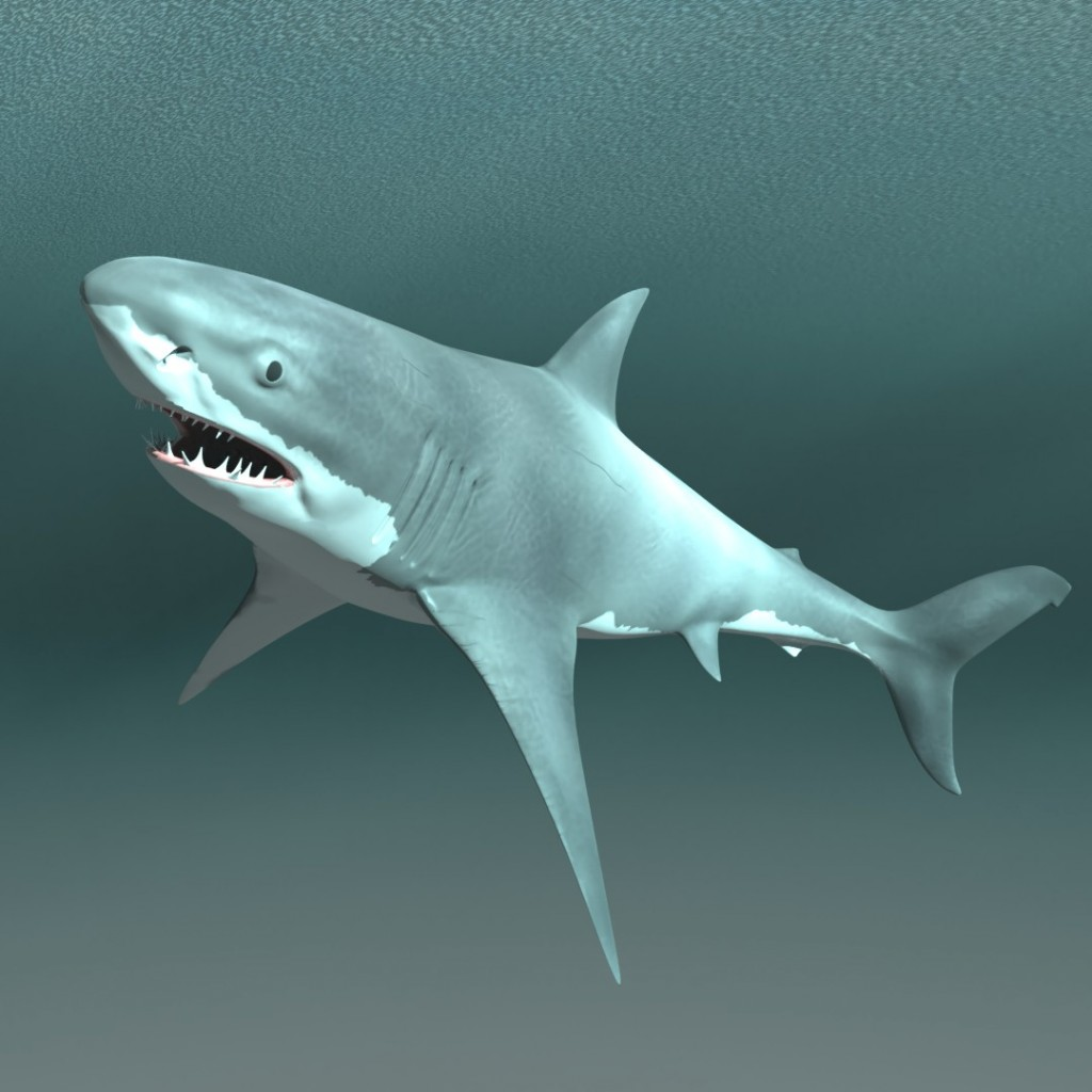 Rigged Bull Shark preview image 1