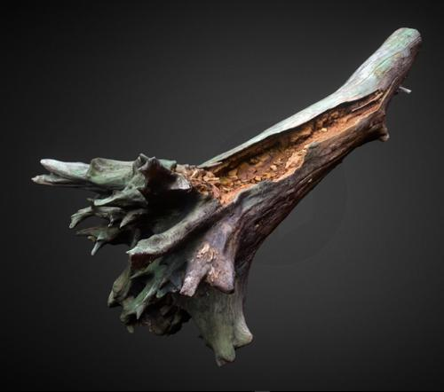 Decayed wood trunk preview image