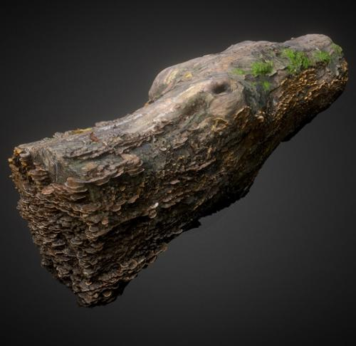 Decayed wood trunk with mushroom preview image