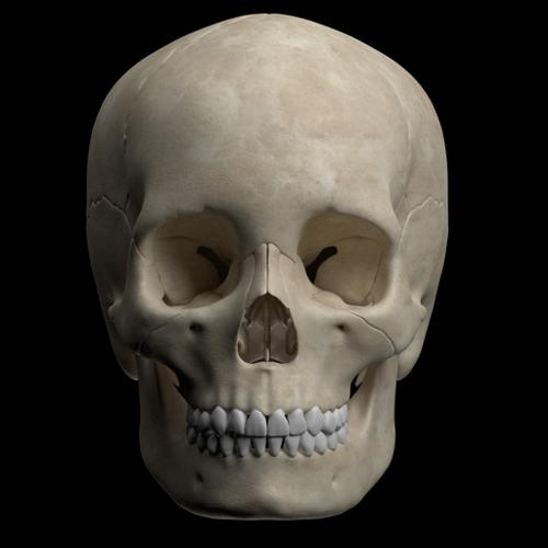 Hight quality  skull  preview image